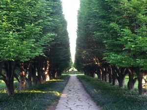 ArborCorridor.wp