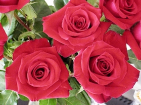 Red Roses.wp